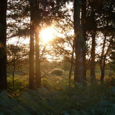 Echappée en forêt