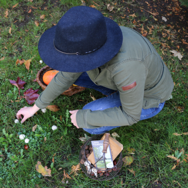 cueillette champignons